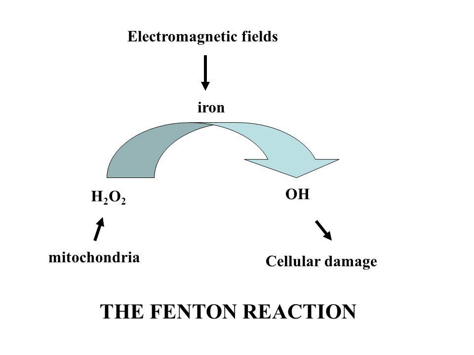 Cellular damage. THE FENTON REACTION.