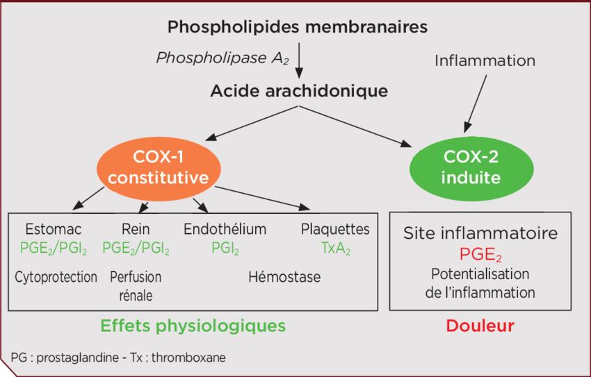 Cascade-de-lacide-arachidonique-et-formation-des-prostaglandines