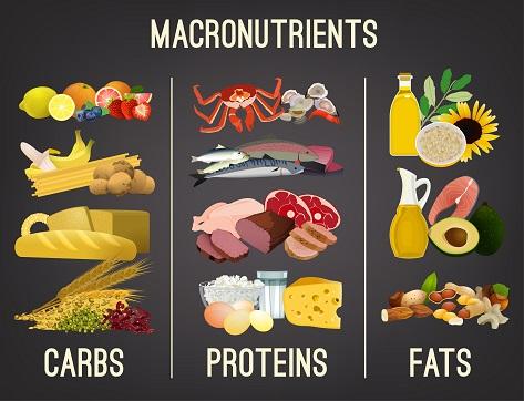 Les%20macronutriments.jpg