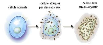 stress-oxydatif2